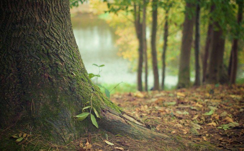 Śliczny i {zadbany zieleniec to nie lada wyzwanie, szczególnie jak jego pielęgnacją zajmujemy się sami.